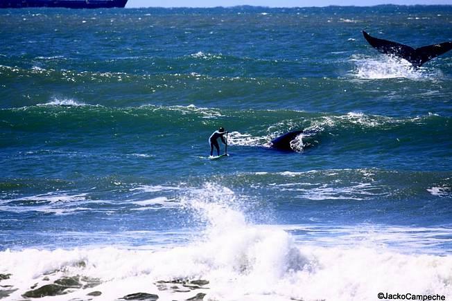 Chargé par une baleine !!!