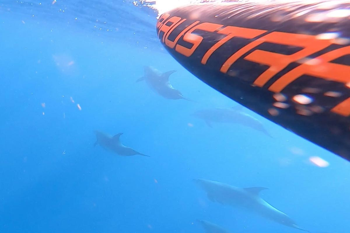 Une session évasion en foil avec des dauphins