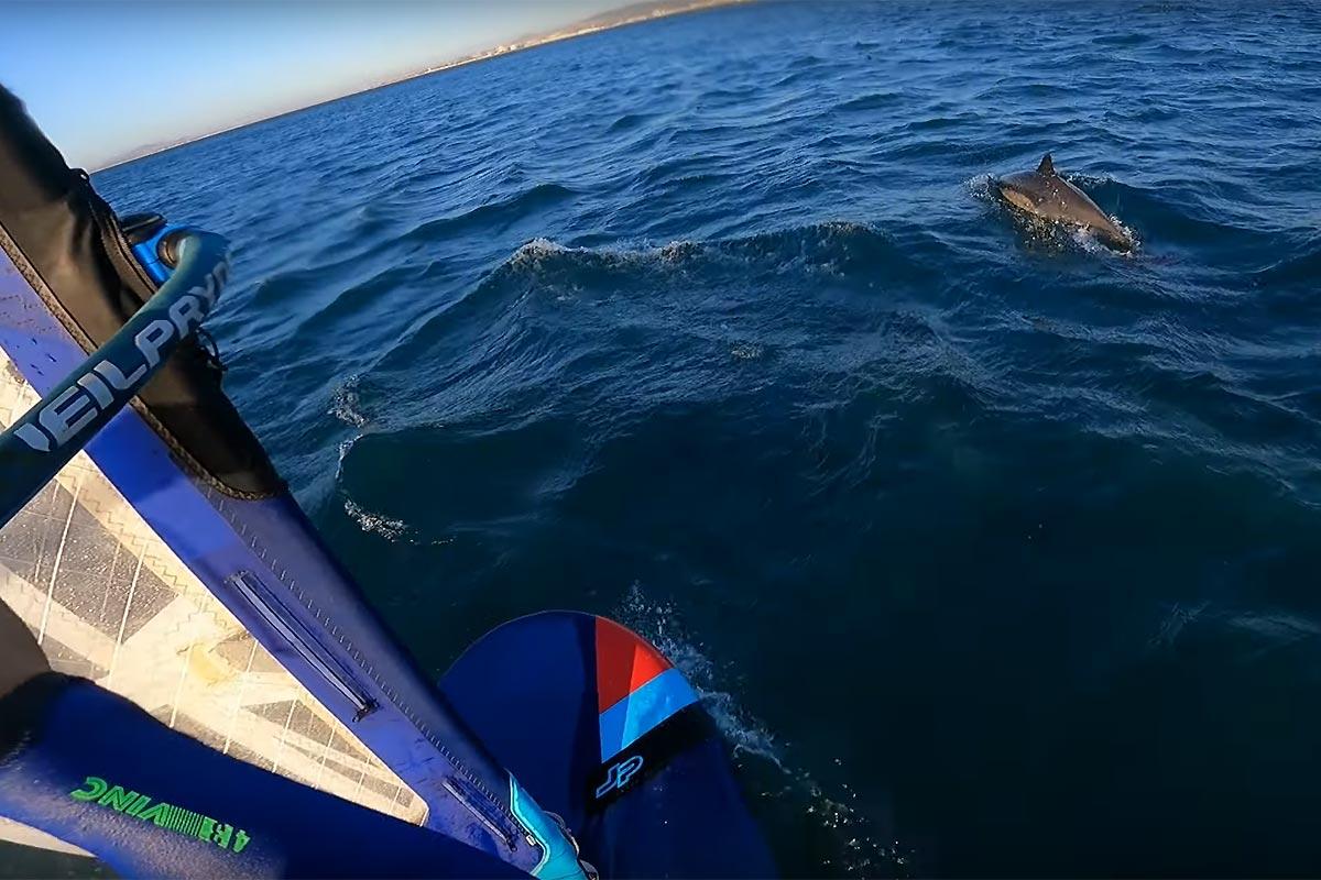 Une session avec des dauphins pour Andy Laufer