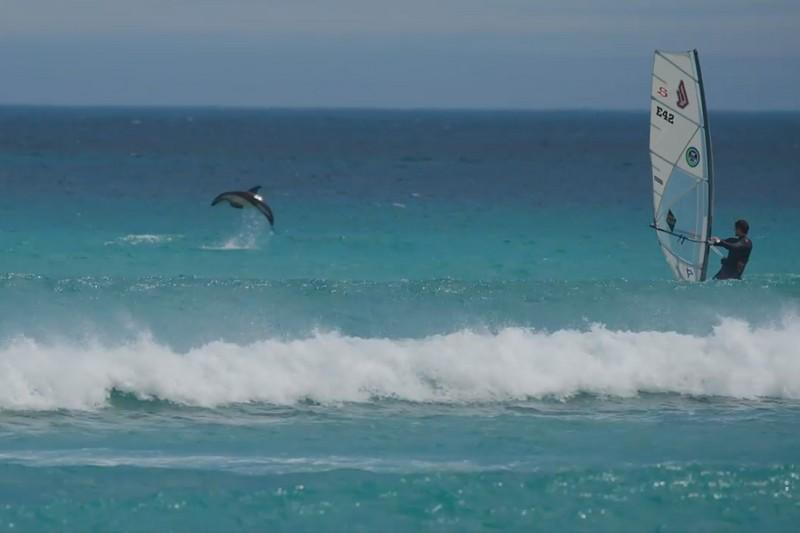 Victor Fernandez et les dauphins